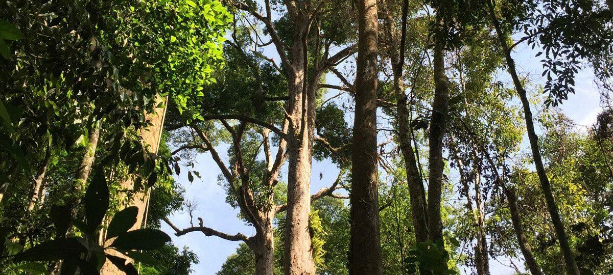 Packliste fürs Dschungel Trekking in Sumatra   Discover Sumatra