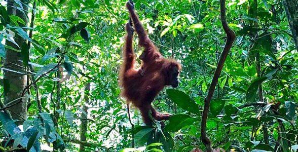 Discover_Sumatra_13