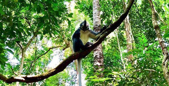 Discover_Sumatra_34