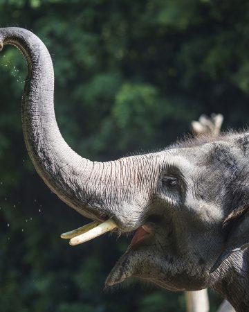 Elefanten-Park